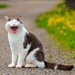 岩合光昭さんの「世界ネコ歩き」写真展が「AQUOS 4K」で見れるイベントが全国で開催中!