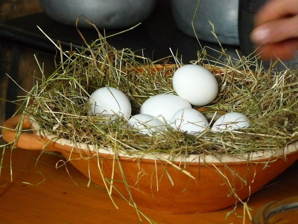 egg-351814_1280