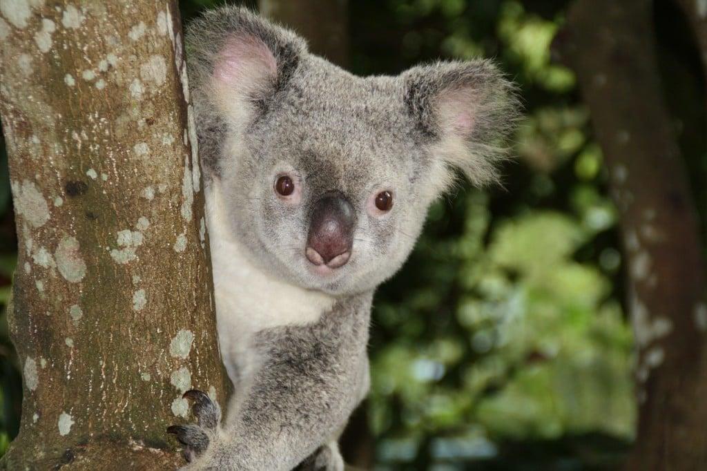 australia-1068578_1280
