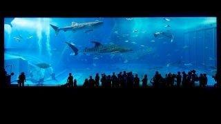 今年の夏休みもソニー銀座ビルに、沖縄「美ら海」がやってくる!「Sony Aquarium」開催!