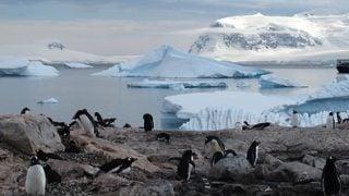 7月16日放送 NHK ディープ・オーシャン「南極 深海に巨大生物を見た」で使用の4Kカメラを紹介。