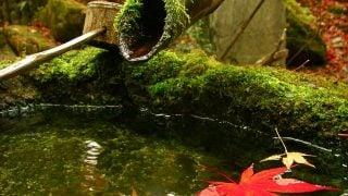 「近松物語」4Kで復元 10月28日「京都ヒストリカ国際映画祭」開催。