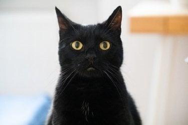 カンテレの『銀座黒猫物語』は、α7 IIIで4K HDR制作。どんな映像になるのか期待!!